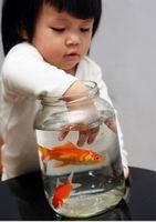 memberimakan ikan